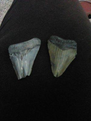 Shark teeth for Sale in St. Petersburg, FL