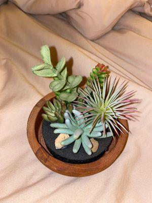 Faux Succulent for Sale in El Cajon, CA
