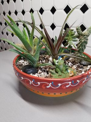 """""""SUCCULENT AND CACTI COLLECTION PLANTS for Sale in Denver, CO"""