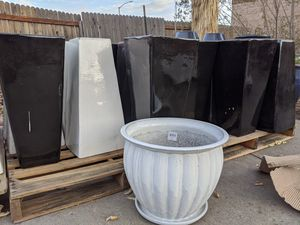 10/24/20 - It's as Simple as Black & White: Plants and Pots for Sale for Sale in Denver, CO