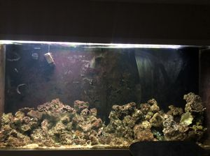 700 Gallon Fish Tank for Sale in Alexandria, VA