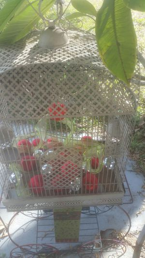 Bird cage for Sale in Haines City, FL
