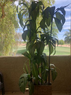 Large (fake) green leaf plant for Sale in Goodyear, AZ
