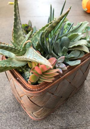 Succulents for Sale in Atwater, CA