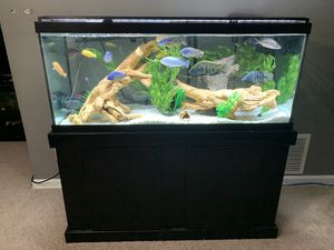 75 gallon tank for Sale in Parma, OH