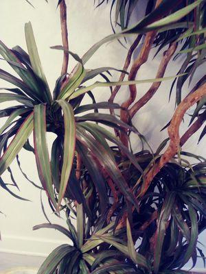 Plant/tree for Sale in Virginia Beach, VA