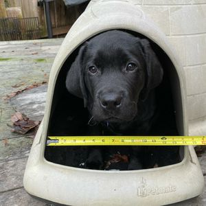 Igloo Style Dog House for Sale in Bothell, WA