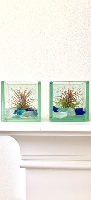 Two gorgeous live air plants in glass cubes with colorful sea glass, home decor for Sale in Everett, WA