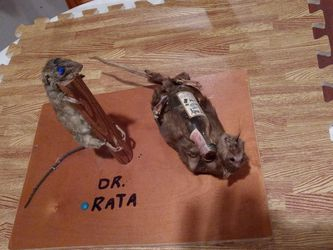 DR.Rata And his Drnuk friend taxidermy for Sale in Baldwin Park,  CA