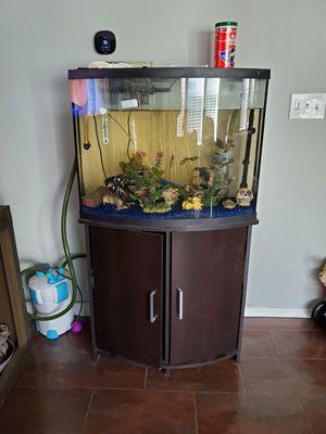 40 gallon bow front aquarium for Sale in Adkins, TX