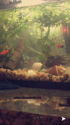 10 gallon fish tank kit for Sale in Tampa, FL