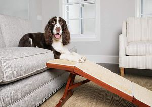 PetSafe CozyUp Sofa Ramp - Durable Wooden Pet Ramp Holds up to 100 lb - Great Couch Access for Dogs and Cats - Cherry Finish with Non-Slip Carpet Trea for Sale in Bloomington, CA
