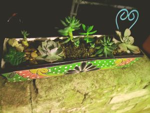Planter and succulents for Sale in Deer Park, TX