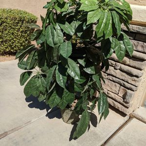 Artificial House Plant for Sale in Gilbert, AZ