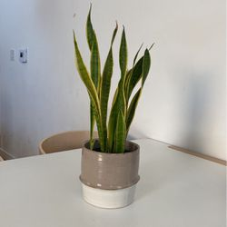 Snake Plant (pot Included) for Sale in Los Angeles,  CA