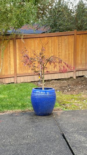Plant with pot for Sale in Redmond, WA