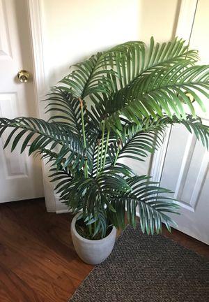 House plant for Sale in Alpharetta, GA