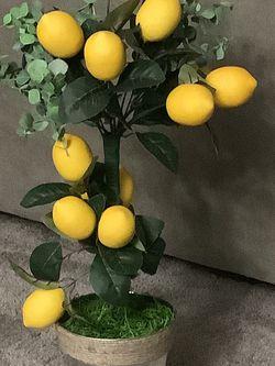 Artificial Lemon Tree for Sale in Jonesboro,  GA
