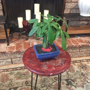Ceraramic Centerpiece with money tree for Sale in Fontana, CA