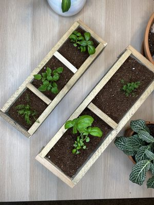 Herb boxes with herbs for Sale in Marietta, GA