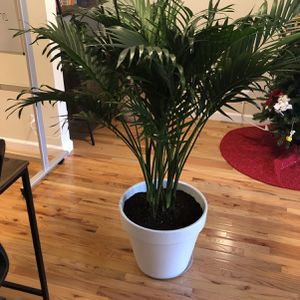 Beautiful Plant for Sale in New York, NY