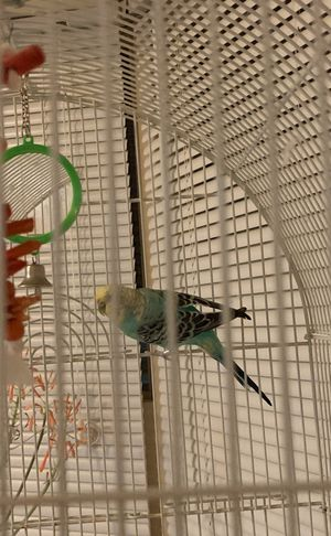 Live Bird with cage for Sale in Laurel, MD