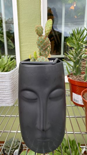 Succulent Houseplants in pots for Sale in Portland, OR