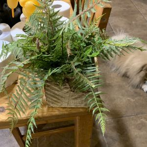 Fake Plant for Sale in Bethpage, NY