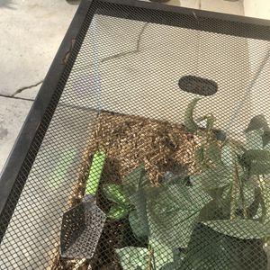Reptile Cage for Sale in Fresno, CA