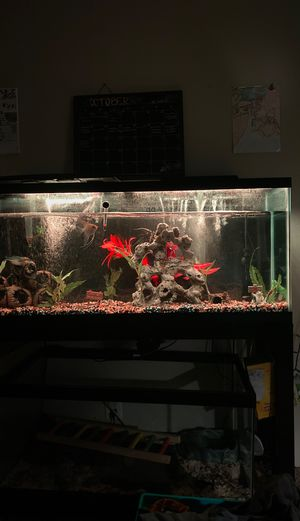 55 gallon tank and stand for Sale in Vista, CA