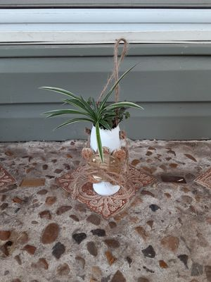 Hanging spider plant and succulents for Sale in Hurst, TX