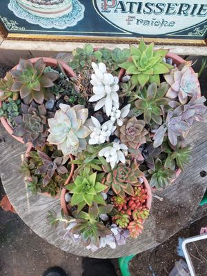 An assortment of succulants in stacking pots for Sale in Alpine, CA