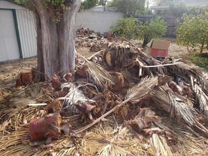 Free Firewood/Palm trunk for Sale in West Puente Valley, CA