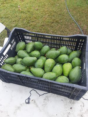 Aguacato for Sale in Montclair, CA