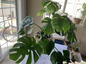 House plants for Sale in Medford, OR