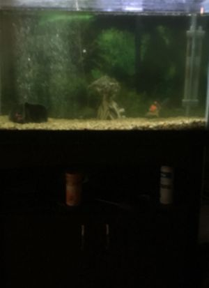 Tanks for Sale in Gaithersburg, MD