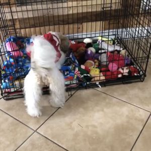 Dog Crate for Sale in Moore, OK