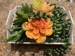 Mini succulent tray for Sale in Naples, FL