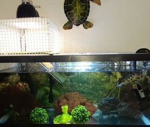 Complete 40 Gallon Aquarium, Canister Filter And Extra Accessories for Sale in Ocala,  FL