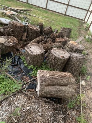 Free Pecan and red oak stumps for Sale in Houston, TX