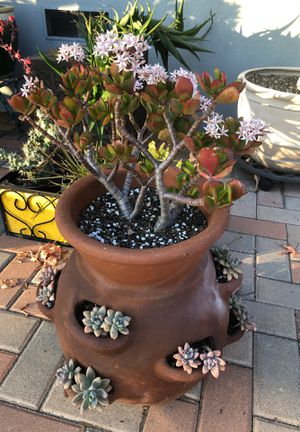 "Succulent plant in a terra-cotta ""strawberry pot"" for Sale in Ontario, CA"