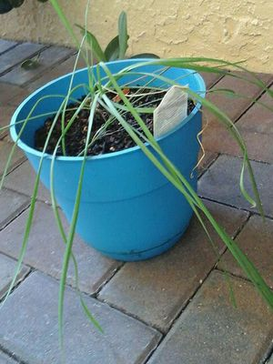 Potted Plant for Sale in Wimauma, FL