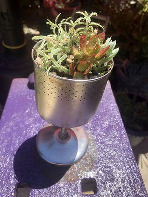 Succulent arrangement for Sale in Selma, CA