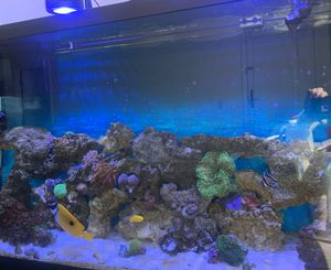 60 gallons Saltwater aquarium for Sale in Malden, MA