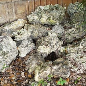 Coral Rocks rare for Sale in Hollywood, FL