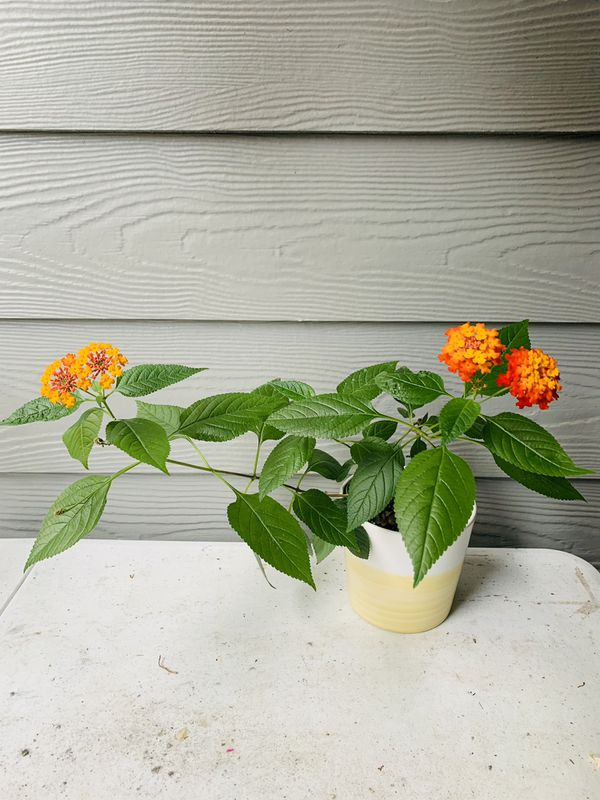 Plant with Home Depot Planter