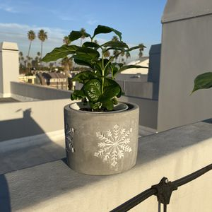 Perfect Holiday Gift - Brand New Planter + Plant for Sale in Santa Monica, CA