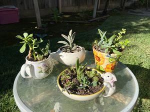 Cute potted succulents for Sale in Visalia, CA