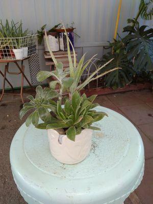 Suculentas for Sale in Rialto, CA