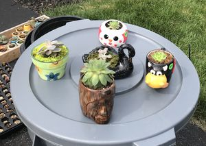 Succulent Planter for Sale in Lewis Center, OH